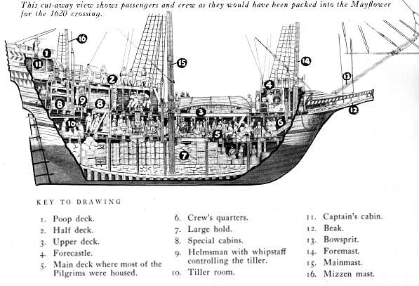 Mayflower Diagram